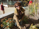 Linda Bovino plants bulbs near Jarvis Hall.