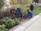 A group of gardeners plant bulbs near Ketter Hall.