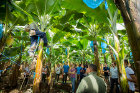 UB students visit a Del Monte banana plantation as part of their trip to Costa Rica, where they learned about fruit management.