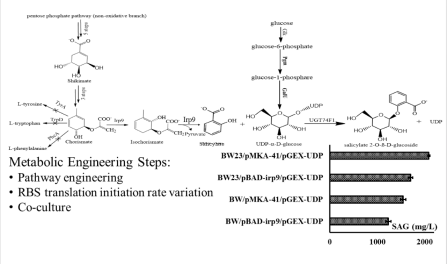 Schematic of Salicylate glucoside (SAG) production