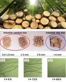 photos showing flow of materials from lumber to saw dust and chips for efficient biomass valorization.