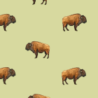 image of Buffalo.